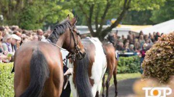 Die Pferde auf dem Weg zum Rennen